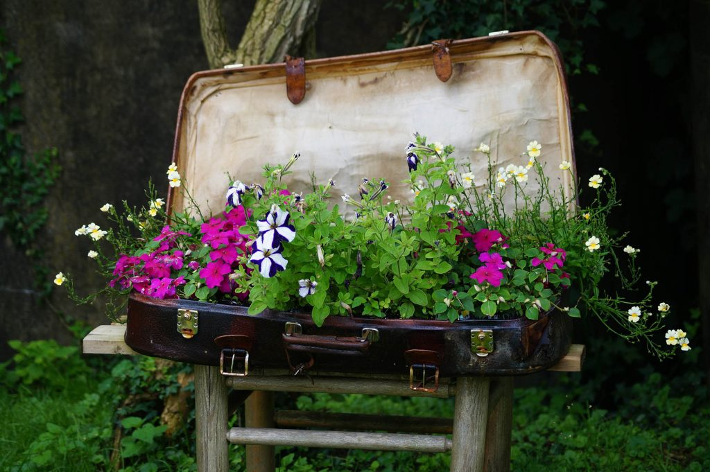 plants in a suitcase